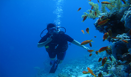 Professional level Scuba Diving Packages